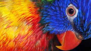 Ptaki widzą bardziej kolorowo