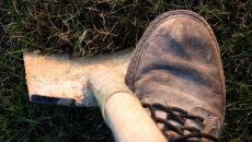 Więźniowie posprzątają mazowieckie lasy