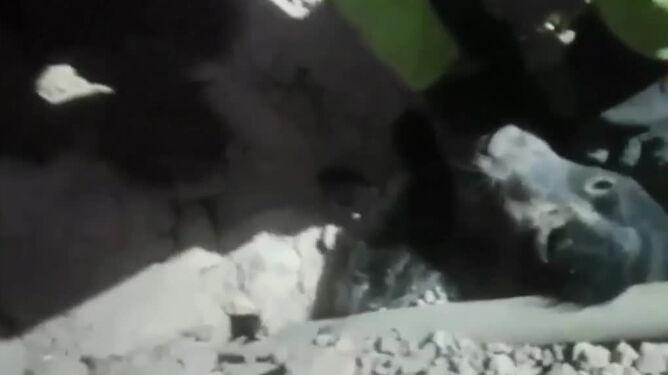 Spędził dwa dni pod gruzami. <br />Szczeniak uratowany po trzęsieniu ziemi