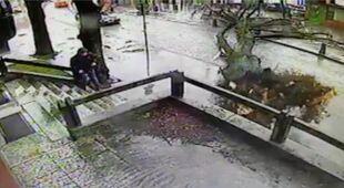 Drzewo upada obok pieszego (Koszałka - Dom Handlowy Kartuzy)