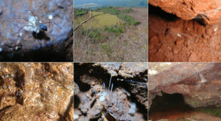 Na Madagaskarze odkryto nowe gatunki pająków