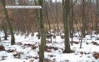 Stado warchlaków w woj. lubelskim